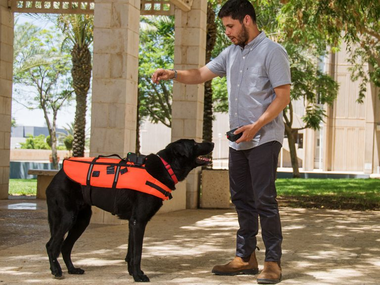 Researcher at ben Gurion University training haptic-vest wearing dog to respond to remote commands