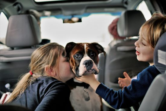 photo of children play with their dog in the backseat of their car
