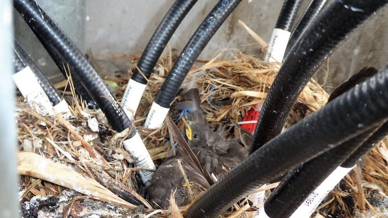 Bird's nest with young chicks inside mobile phone mast