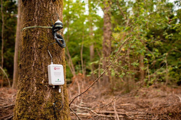 photo of a Vodafone Internet of Things sensor on a tree