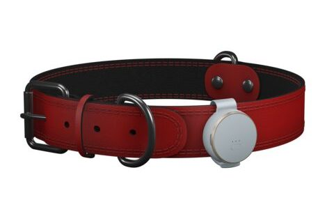 V-Pet (Dove) - A small pet tracker with a clip on a collar.