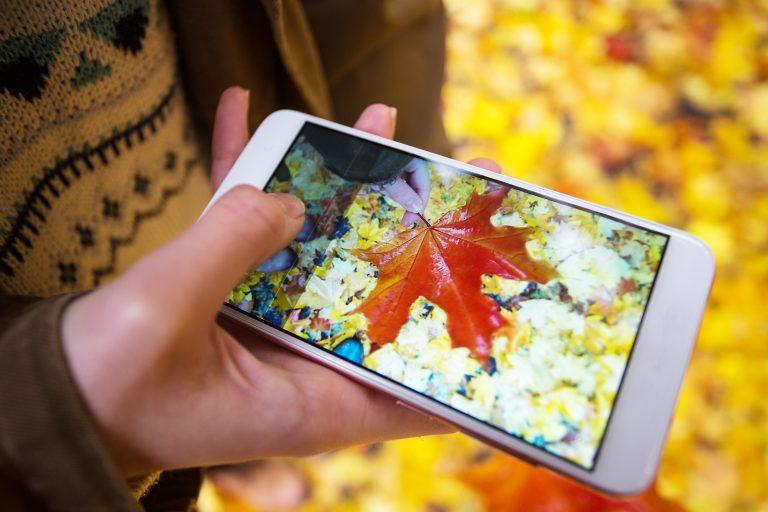 Red autumn leaf seen through smartphone camera